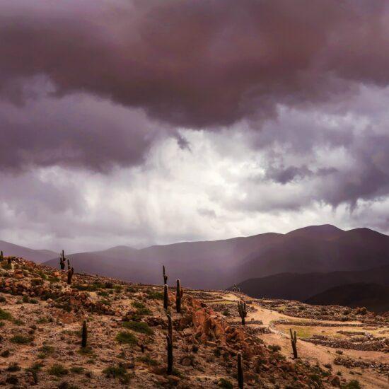 Argentina-Salta-Cactus
