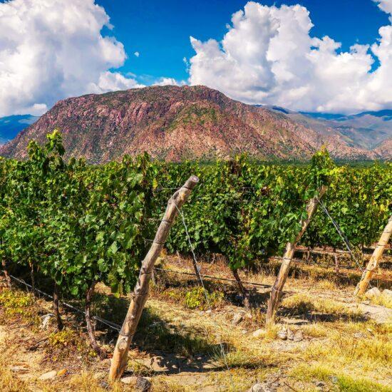 Argentina-Salta-Vineyard