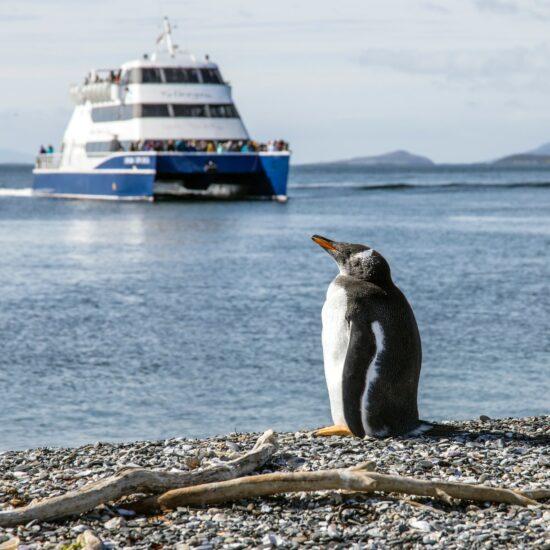 Argentina-Ushuaia-Pinguin-Catamaran