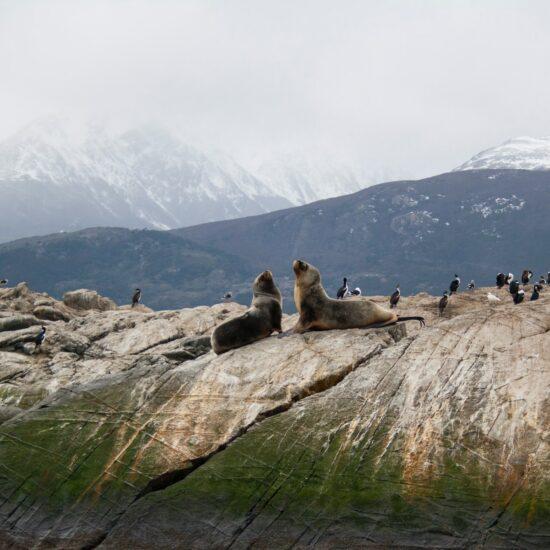 Argentina-Ushuaia-Sea-Lions