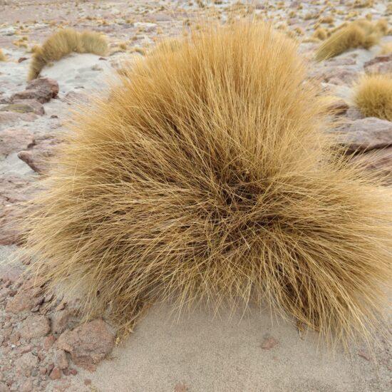 Bolivia-Eduardo-Avaroa-National-Reserve-Geysers-Altiplano