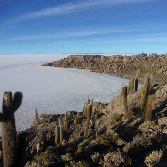 Bolivia-Salar-de-Uyuni-Inkahuasi-Cactus
