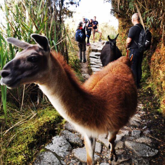 Inka-Trail-Camino-Inca-27