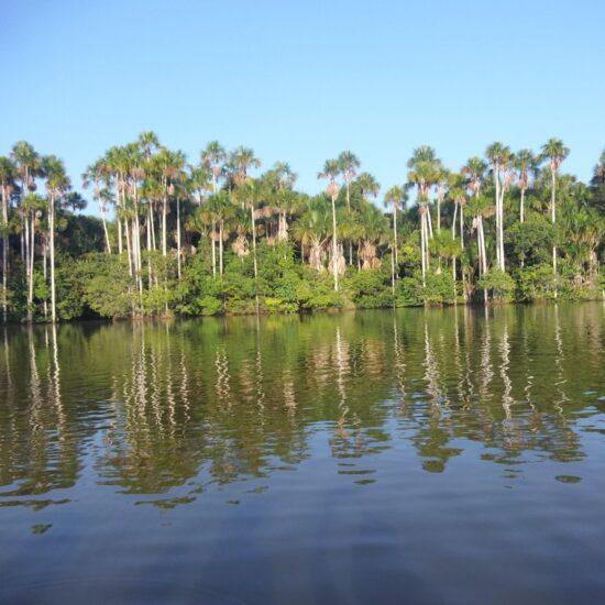 Peru-Amazonie-Tambopata