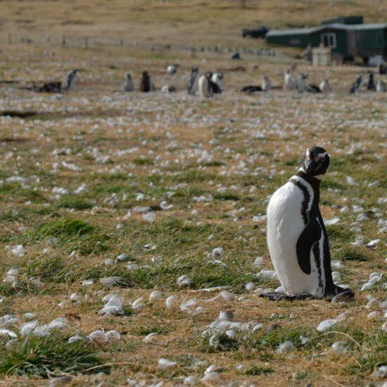 Chile-Patagonia-Ohnova-zeme