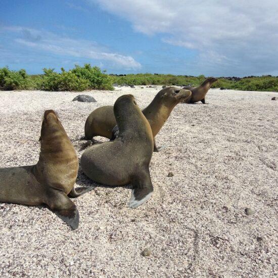 Ekvador-Galapagy
